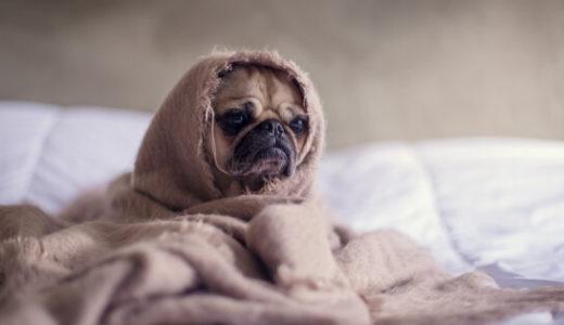 寒がりな人の寒さ対策!家でもオフィスでも冷え対策を。| おすすめアイテム&対策紹介